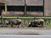 Viele Tiere auf und an den Straßen unterwegs