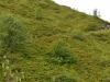 Ganze Berge voll von Rhododendren, leider schon verblüht
