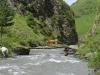 Auch eine Kuh will sich nicht unbedingt die Hufe nass machen