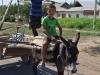 Viele Esel unterwegs, oft mit kleinen Jungs drauf