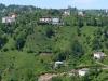 Teeanbau in Rize