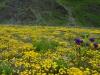 Blumenwiesen überall