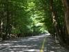 Üppige Wald-Allee